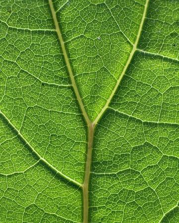 tissue texture: Green leaf cell tissue texture pattern