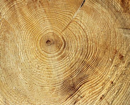 Anelli di crescita annuale circle in ceppo di albero Archivio Fotografico