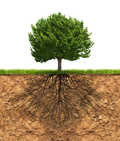 Big green tree with roots in soil beneath growth concept