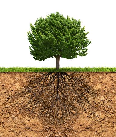 Grote groene boom met wortels in de grond onder de groei concept Stockfoto