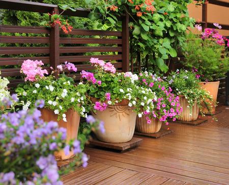 ollas de barro: flores frescas en crisoles de arcilla en terraza de madera de verano Foto de archivo