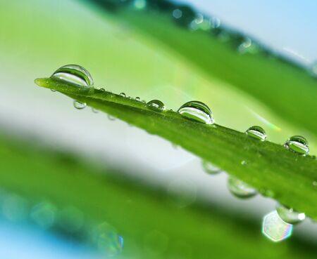 fresh leaf: Fresh water drops on green leaf natural macro background