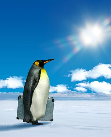 Antarctic penguin planning to move, climate change  warming concept