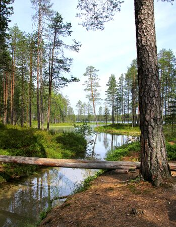 streamlet: Forest lake and clear water streamlet in Finnish wilderness Stock Photo