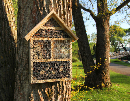 Insect hotels attached on beautiful garden trees 版權商用圖片