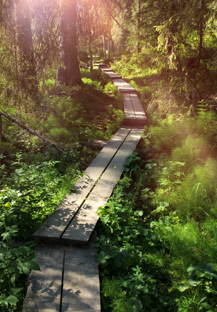 Wooden plank causeway in lush green Scandinavian forest