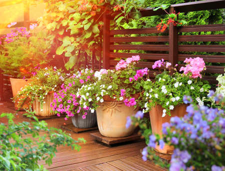 Lush flowers in clay pots on sunny wooden summer terrace