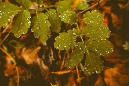 Raindrops on a leaves at november day - vintage style Фото со стока