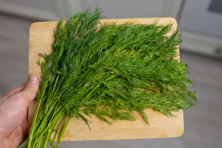 Dill on a cutting board in the male hand