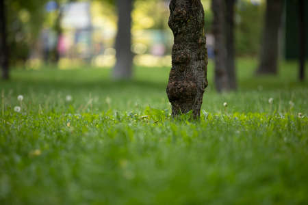 Grass and tree trunk in a summer park Stok Fotoğraf