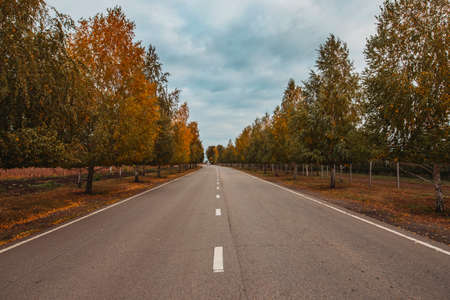 Countryside road, way in autumn day