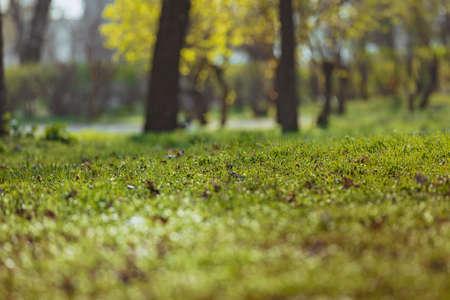 Spring green grass park background Foto de archivo