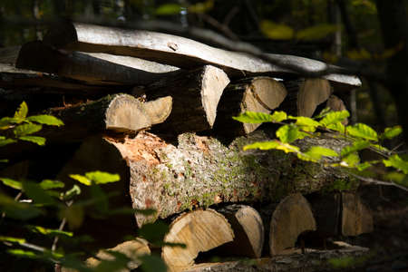 wood stere in the forest