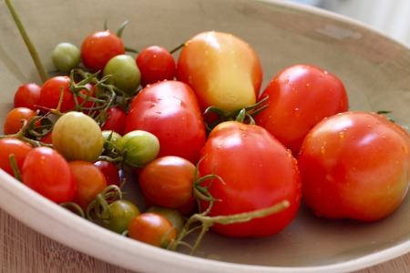 freshly picked: Freshly picked tomatoes in bowl Stock Photo