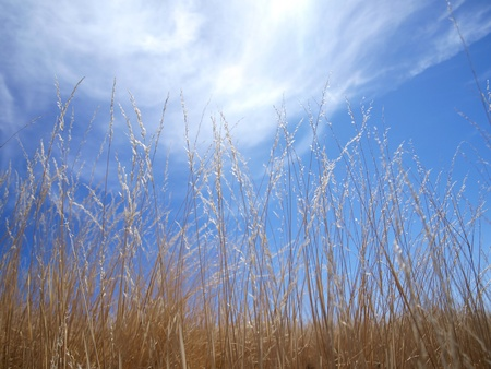 Brown grass and blue sky       photo