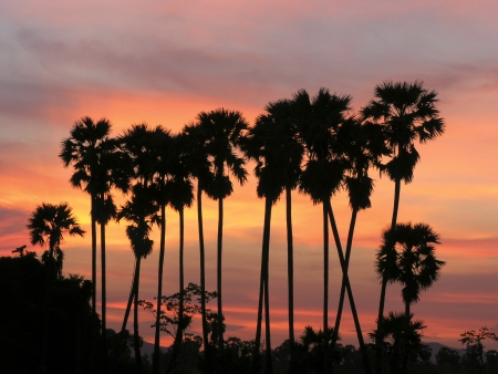 palm trees in the sunset sky photo