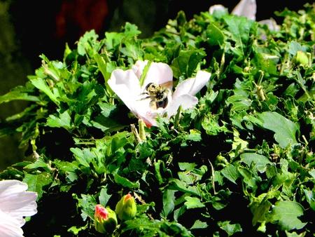 Bee working Фото со стока