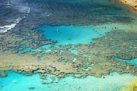 Coral Reef Reklamní fotografie