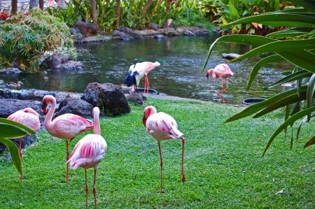 Flamingo Fellowship