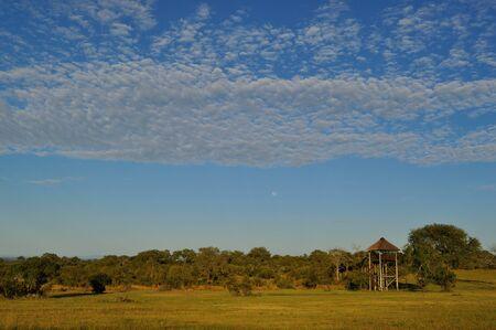 sabi sands: Sabi Sands, South Africa Stock Photo