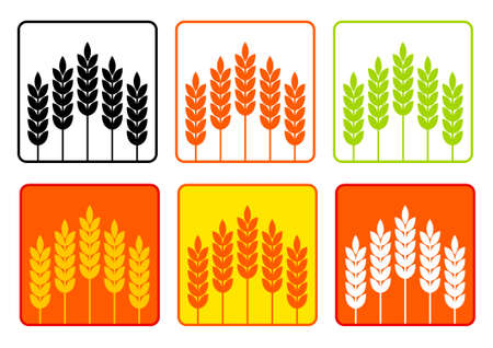 Collection of cereals Stock Vector - 11194721