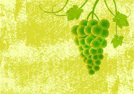 Grape on green background  Vector