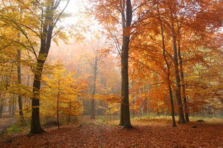 Autumn forest Фото со стока - 12685910