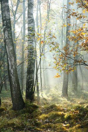 Ma�ana en el bosque