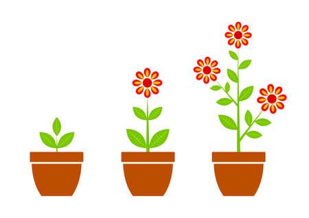Red flower in flowerpot    Illustration