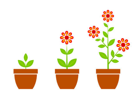 Red flower in flowerpot    Stock Vector - 13563340