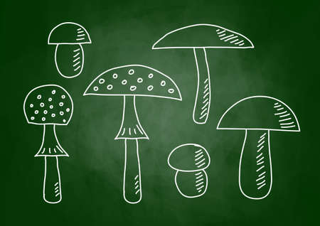 Drawings of mushrooms on blackboard Stock Vector - 13592214