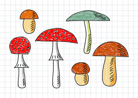 squared paper: Drawings of mushrooms on squared paper       Illustration
