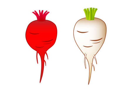Beet-root and sugar-beet on white background