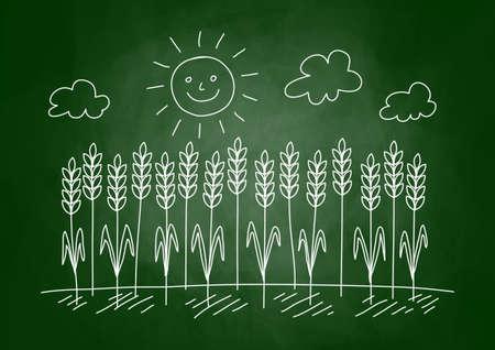 Drawing of wheat field on blackboard Stock Vector - 17981085