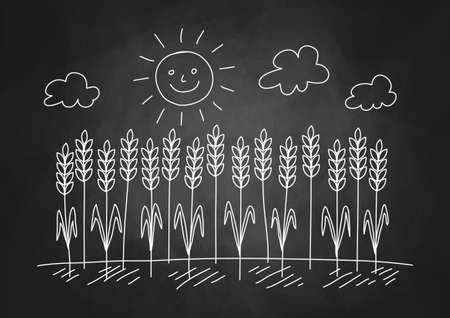 Drawing of wheat field on blackboard Stock Vector - 17981084