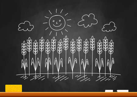 Drawing of wheat field on blackboard Stock Vector - 18516754