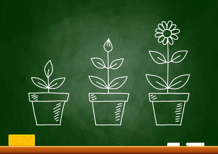 plant growing: Drawing of flowers on blackboard Illustration