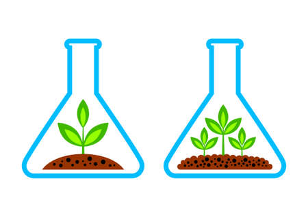 Plant in laboratory glass Vector