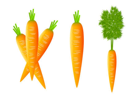Carrots on white background Vector