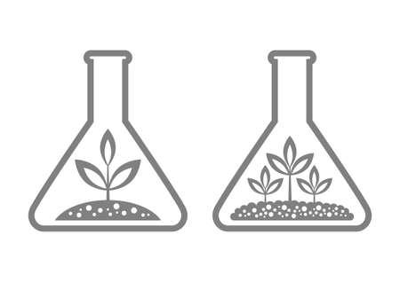 soil: Plant in laboratory glass
