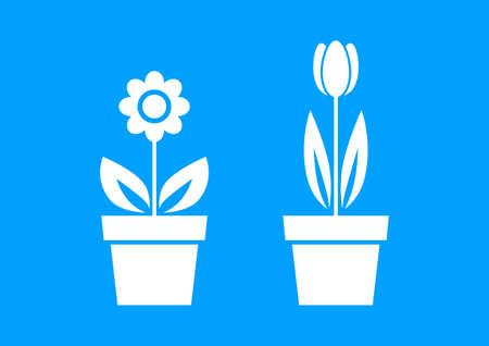 tulipan: Biały kwiat ikony na niebieskim tle