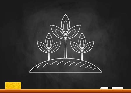Drawing of plant on blackboard Vector