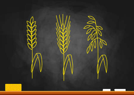 cereals: Drawing of cereals on blackboard