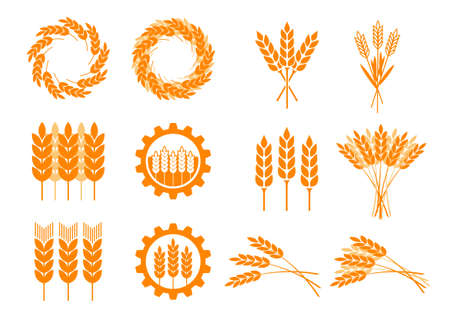 cereal plant: Orange cereal icons on white background