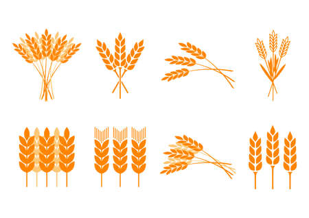 corn stalk: Orange cereal icons on white background