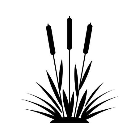 Cattail vector icon on white background