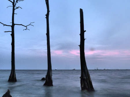cypress tree: three cypress tree sitting in the lake out at fountianbleu state park