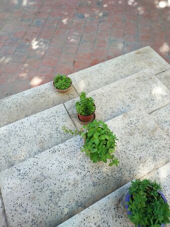 Four bushes in the yard ladders