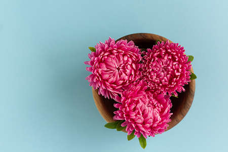 Three pink aster flowers gathered in wooden bowl on blue background. Copy space.
