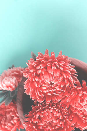 Red flowers in wooden bowl on light blue background. Cold soft toned image. Copy space.